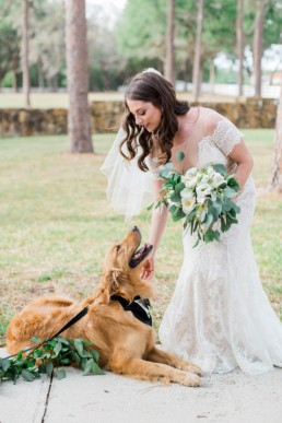 Golden Retriever wedding